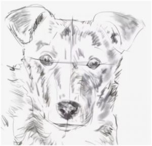 How To Draw A Dog Step By Step Guide How To Draw
