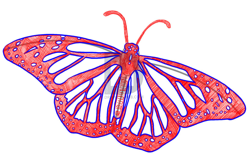how-to-draw-a-realistic-butterfly-draw-real-butterfly-step-6_14_000000002279_3