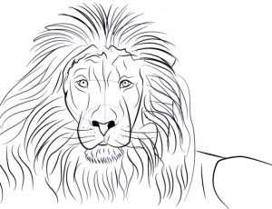 How To Draw Lion Step By Step Guide How To Draw
