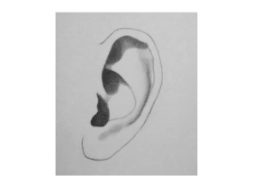 How to Draw Ears Step by Step