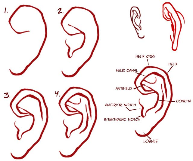 Easy to Draw Ears