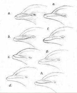 How to Draw Dolphin Tail and the Head