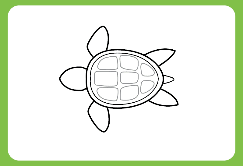 Add-details-to-the-turtle-shell