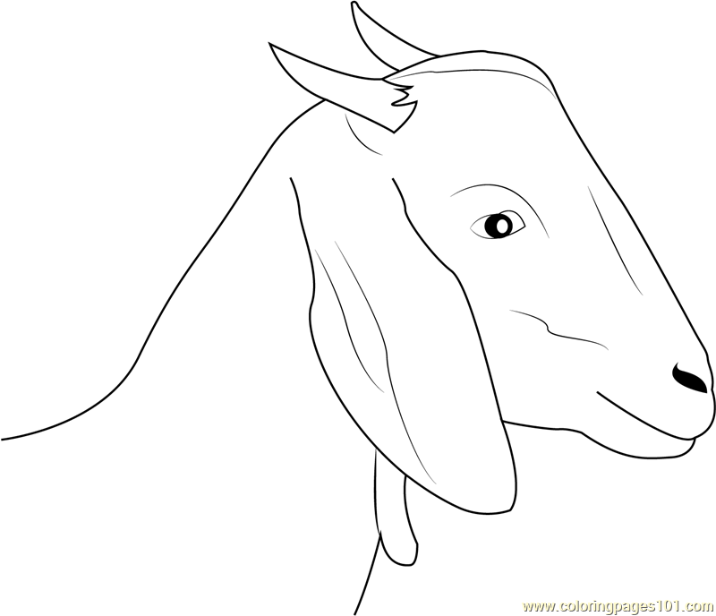 Goat-Face (1)