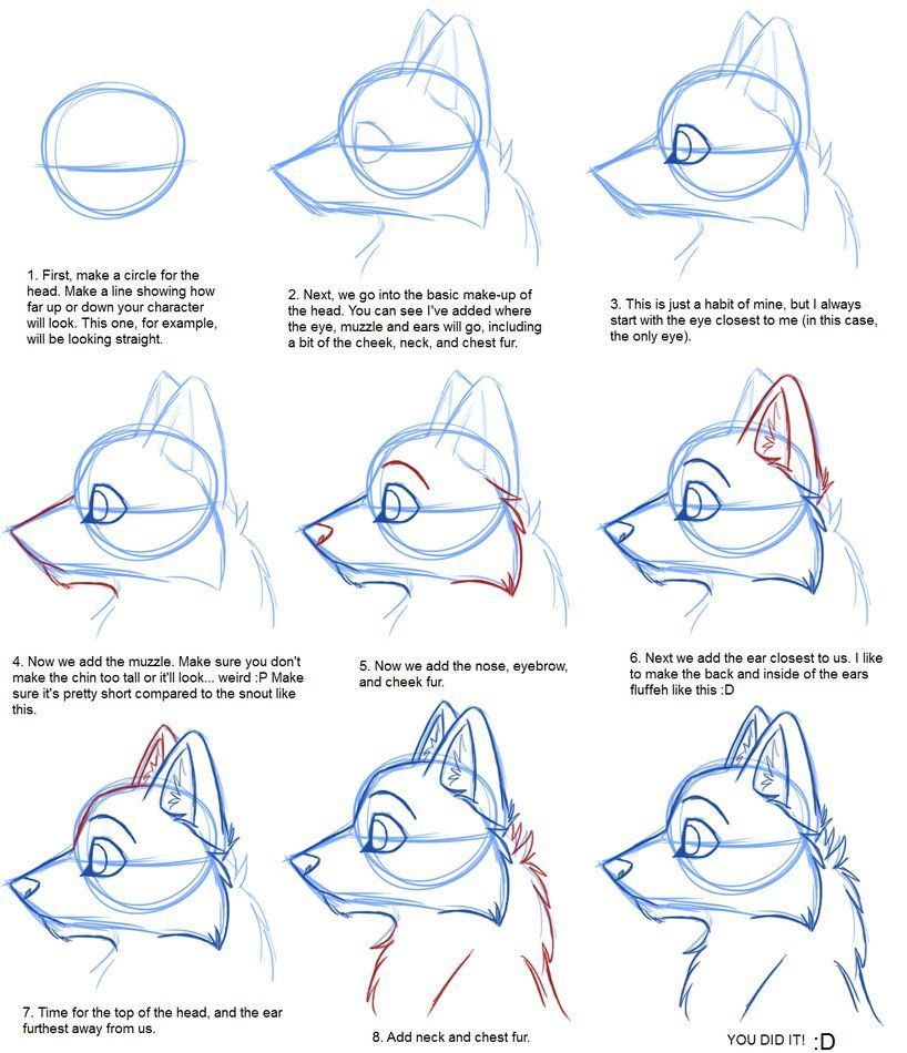 For beginners to draw Furries