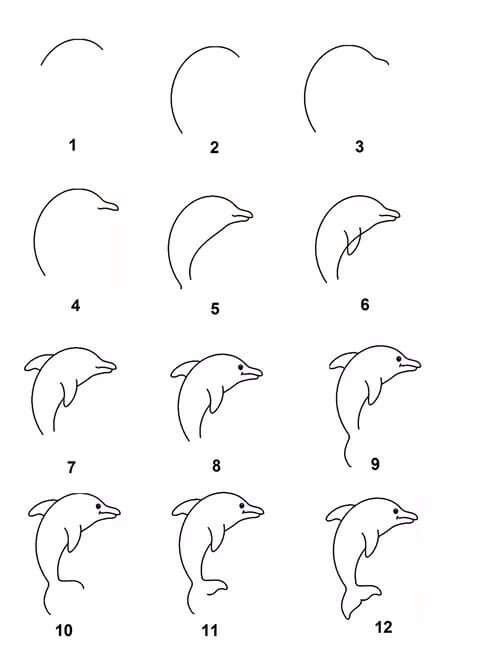 Draw a Dolphin Easy