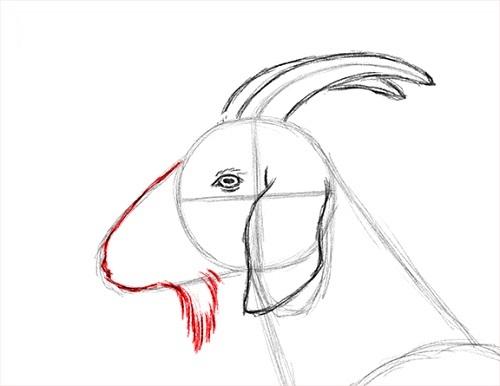 draw-goat-12