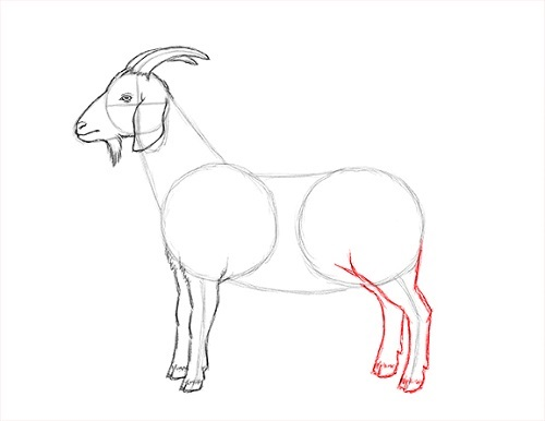 Easy Way to Draw a Goat