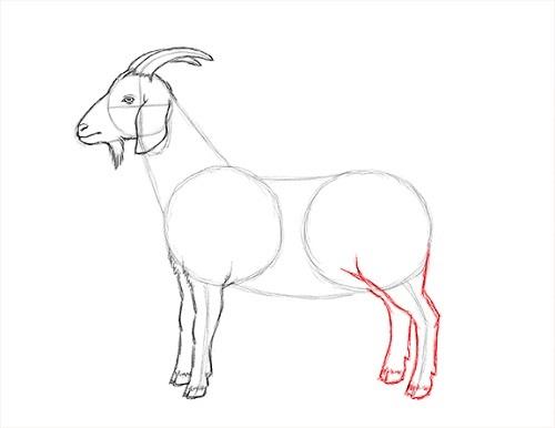 draw-goat-16