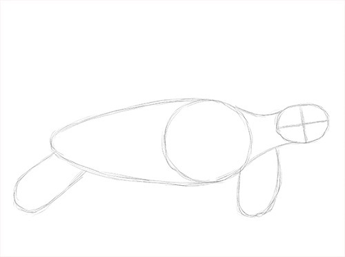 draw-sea-turtle-initial-sketch