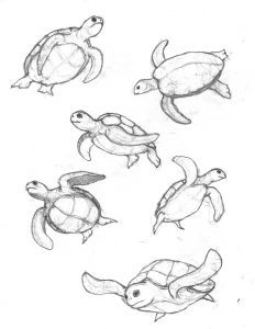 Step By Step To Draw a Cute Turtle Swimming