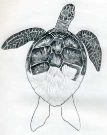 Ways To Draw Turtle Shell