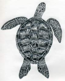 how-to-draw-a-turtle12s