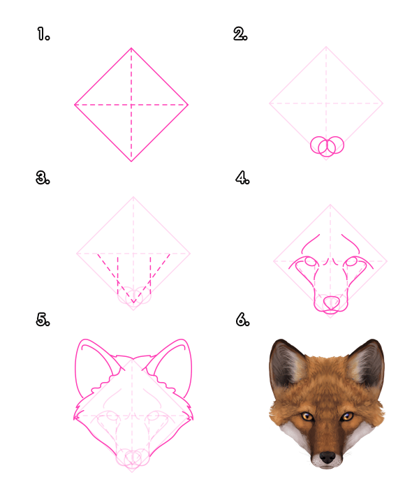 How to Draw a Fox : Step By Step Guide | How to Draw