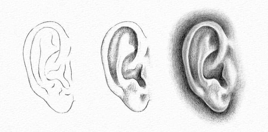 ear-drawing